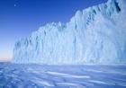 антарктида,пингвины